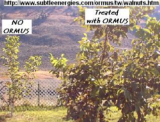 ORMUS FERTILIZER for PLANTS and AGRICULTURE – ORMUS